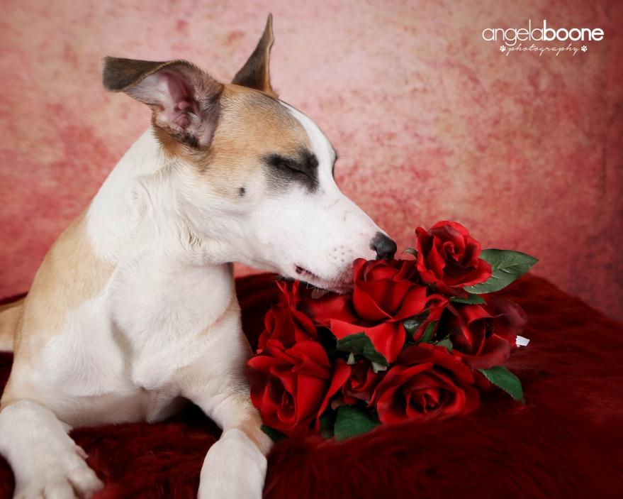 Adoptable Dog - MN