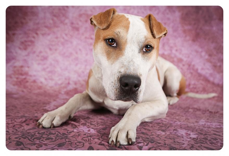 adoptable, dog, A Rotta Love Plus, rescue